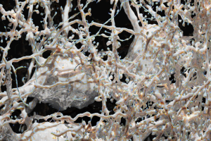 Marwan Abdellah - Close-up Of The Mouse Visual Cortex - EPFL