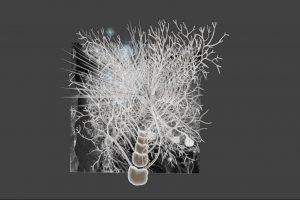 Mario Negrello - Synaptic wave propagation in Parallel Fiber-Purkinje Neuron connection- Erasmus Medical Center
