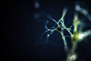 Alwin Kamermans - Rat Neuron - Vrije Universiteit Medical Center