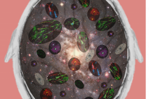 Ana Rondelli - Our Brain, a Galaxy of Cells and Neuronal Connections - University of Edinburgh