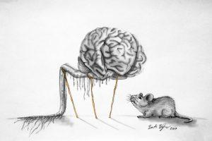 Benjamin Barti Understanding the brain - Hungarian Academy of Sciences