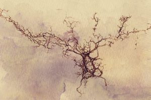 Heather Bondi - Roots and branches of our minds - University of Insubria