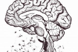 Anastasia Illarionova - Fall of the brain - German Center for Neurodegenerative Diseases