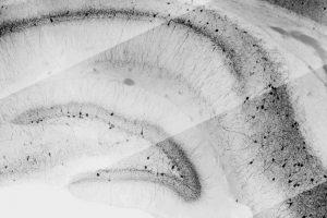 Gabrielle Deidda - Painting the source of memory -Istituto Italiano di Tecnologia