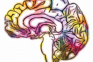 Sandra Hanekamp - Fifty shades of brain - University Medical Center Groningen