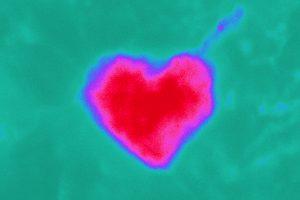 Xianshu Bai - Cupid has not forgotten your astrocyte - University of Saarland